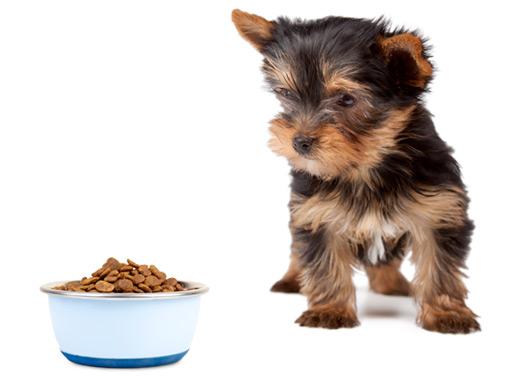 Dê sempre alimentos apropriados para seu cachorro e água em abundância sempre limpa e fresca