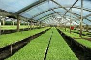 Aprenda Fácil Editora: Como defender suas hortaliças da estiagem