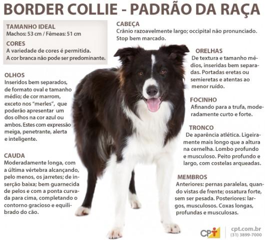 Padrão da raça Border Collie