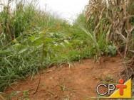 Manejo integrado de plantas daninhas e pragas