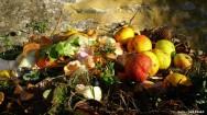 Faixas de temperatura entre 5 e 65º C  favorecem a proliferação de microrganismos e deterioração dos alimentos