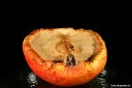 Fatores que interferem na conservação dos alimentos