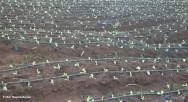 A fruticultura irrigada tem se mostrado como a atividade agrícola que mais se expande nos últimos anos