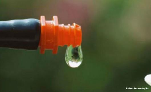 Fruticultura irrigada - sistema de gotejamento permite plantar frutas no sertão nordestino