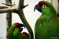 Taxidermia - equipamentos e produtos químicos para o empalhamento de aves e mamíferos