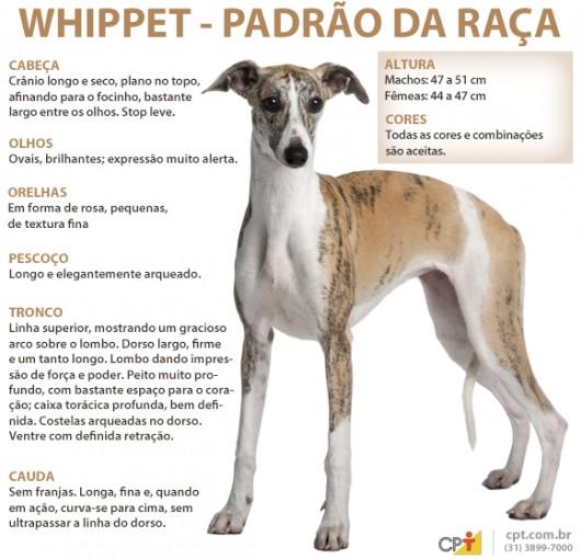 Padrão da raça Whippet