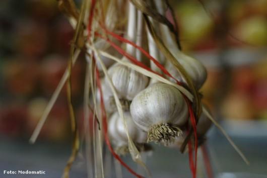 Alho orgânico - principais doenças e pragas