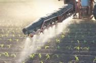 O uso criterioso da irrigação, dos fertilizantes e dos pesticidas são essenciais