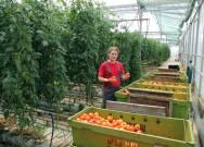 Vegetais desidratados - matéria-prima: qualidade, custo, cultivo, colheita, variedade, maturação e armazenamento