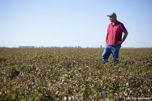 Produção de Amendoim - contaminação por Aflatoxina pode intoxicar homens e animais