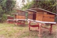 Aprenda Fácil Editora: Apicultura: Instalação das colmeias
