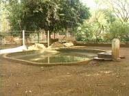 Na criação de capivara em cativeiro há a necessidade de um tanque com rampa suave para que os animais possam banhar-se