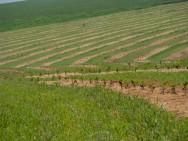 A acerola exige alguns tipos de podas desde o momento em que ela começa a soltar os ramos. Foto/crédito: Agricultura SP