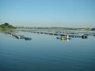 Os flutuadores podem ser constituídos por bombonas de plástico com capacidade de 50 L. Foto/crédito: Agricultura SP
