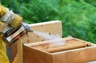 O fumegador é uma ferramenta indispensável, que deverá ser usada todas as vezes em que houver o manejo das abelhas