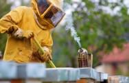 Saber operar o fumegador é primordial para o domínio da colmeia