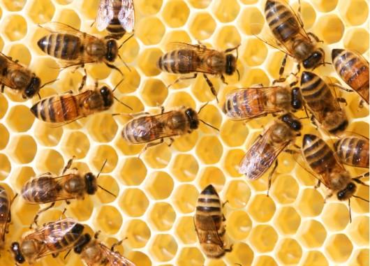 Defensividade das abelhas, domínio da colmeia e manuseio dos quadros pelo apicultor