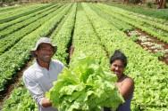 Cooperativa de trabalho rural - Como funcionam as cooperativas e etapas de abertura