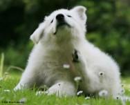 As picadas de pulgas causam irritação e grande desconforto aos animais, principalmente aos cães