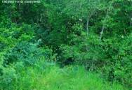 A sucessão secundária depende da presença de vegetação remanescente, ou ainda da rebrota de espécies arbustivo-arbóreas