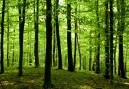 A semeadura de espécies arbóreas pioneiras pode induzir a regeneração florestal