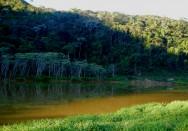 Regeneração natural das florestas e sucessão secundária das espécies arbustivo-arbóreas