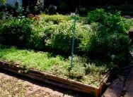 Regras gerais para a colheita das plantas medicinais