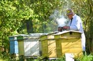 O correto manejo da colmeia aumenta os lucros do apicultor