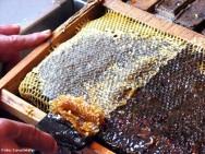 Mientras que el campo de la nube está creciendo (durante la floración), la armadura es ya grande y productora de miel