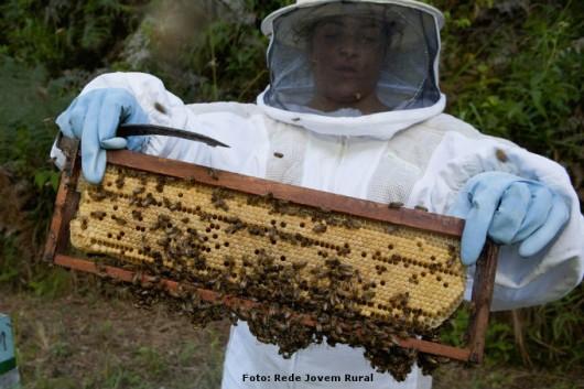 El correcto manejo de la colmena aumenta sustancialmente los beneficios apicultor