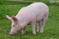 O produtor deve preocupar-se em conservar os animais em bom estado de higidez (saúde), a fim de prevenir enfermidades