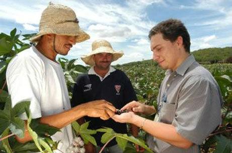As cooperativas agrícolas garantem boas vantagens aos trabalhadores e aos produtores rurais. Foto: Reprodução