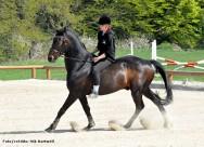 A equoterapia une as técnicas de  equitação e atividades equestres com a finalidade de reabilitar e educar  as pessoas com deficiência