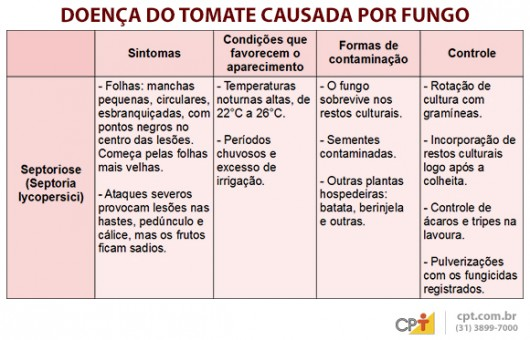 Indústrias de processamento exigem tomates livres de pragas e doenças