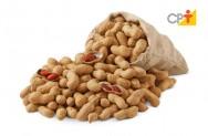 Produção de Amendoim - medidas para prevenção da Aflatoxina