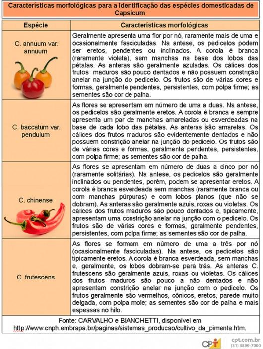 Pimentas domésticas - saiba tudo sobre a botânica do gênero Capsicum