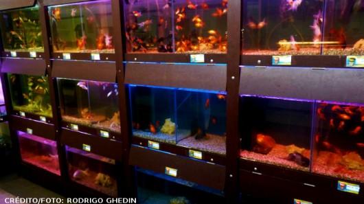 Quais os procedimentos legais para abrir uma loja de aquários?