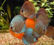 A loja de áquários também deverá possuir um registro junto ao IBAMA, já que irá trabalhar com peixes ornamentais.