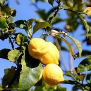 A análise foliar constitui um dos meios mais precisos para avaliar o estado nutricional das plantas