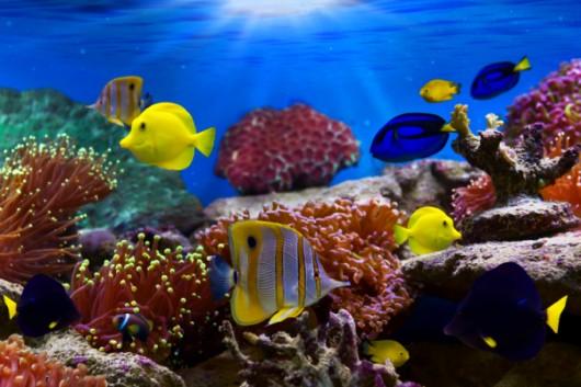 Técnicas de manejo e manutenção de aquários