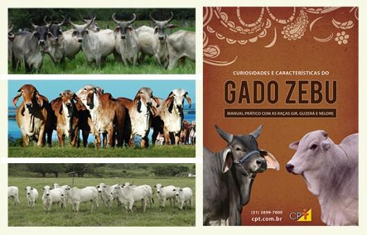 Características e Curiosidades do Gado Zebu - Manual Prático com as Raças Nelore, Gir e Guzerá