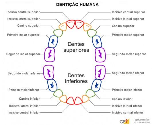 Auxiliar de Dentista - cavidade oral humana e dentições