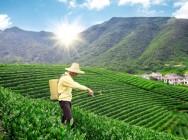 Regulagem de pulverizadores agrícolas: principais parâmetros e tipos de bico