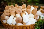 Champignon: compostagem do cogumelo - fase I