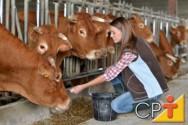A importância dos suplementos na dieta dos bovinos na época da seca