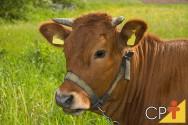 A análise do bem-estar animal tem papel relevante no sistema principalmente para os animais manejados em sistemas de pastejo rotacionado