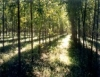 Plantação de eucaliptos ganha ajuda de novas máquinas
