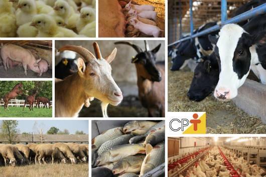 Começa em 26 de julho de 2014 a 85ª Semana do Fazendeiro de Viçosa