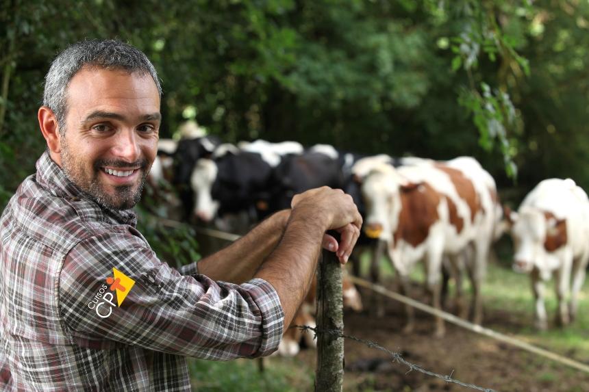 Identificação do cio em vacas leiteiras - importância para o produtor   Artigos CPT