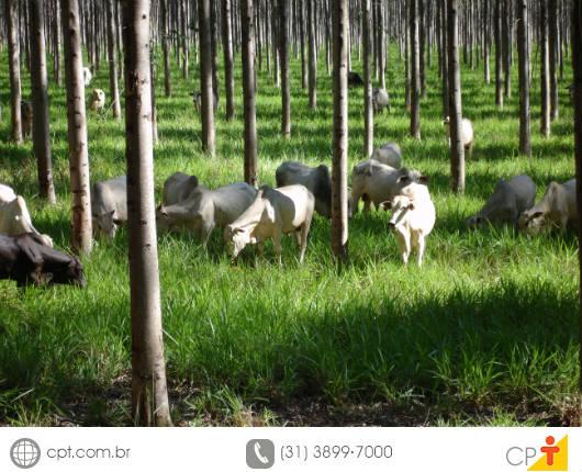 A primeira etapa da implantação de um Sistema de Integração Lavoura-Pecuária-Floresta é a escolha do local